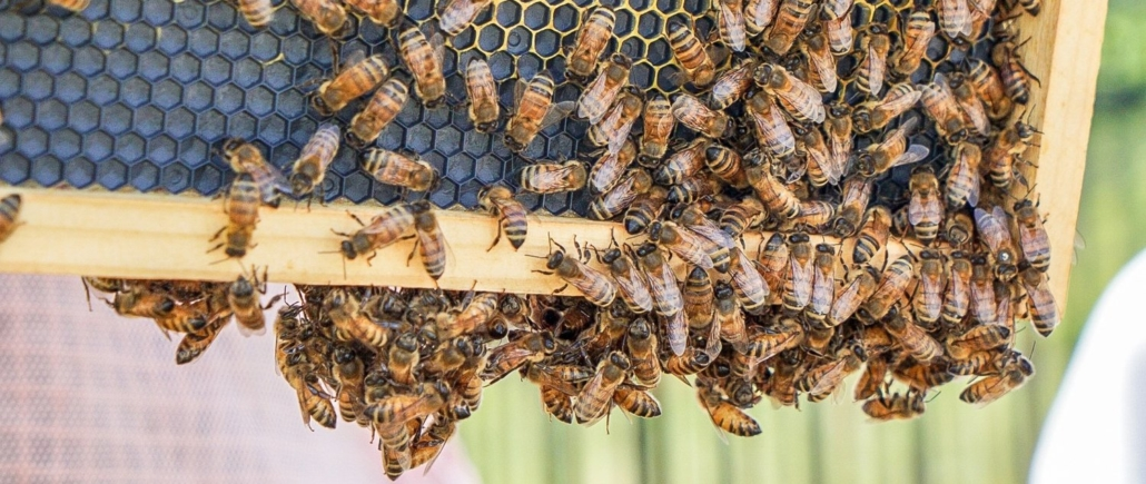 this photo shows honey bees in action