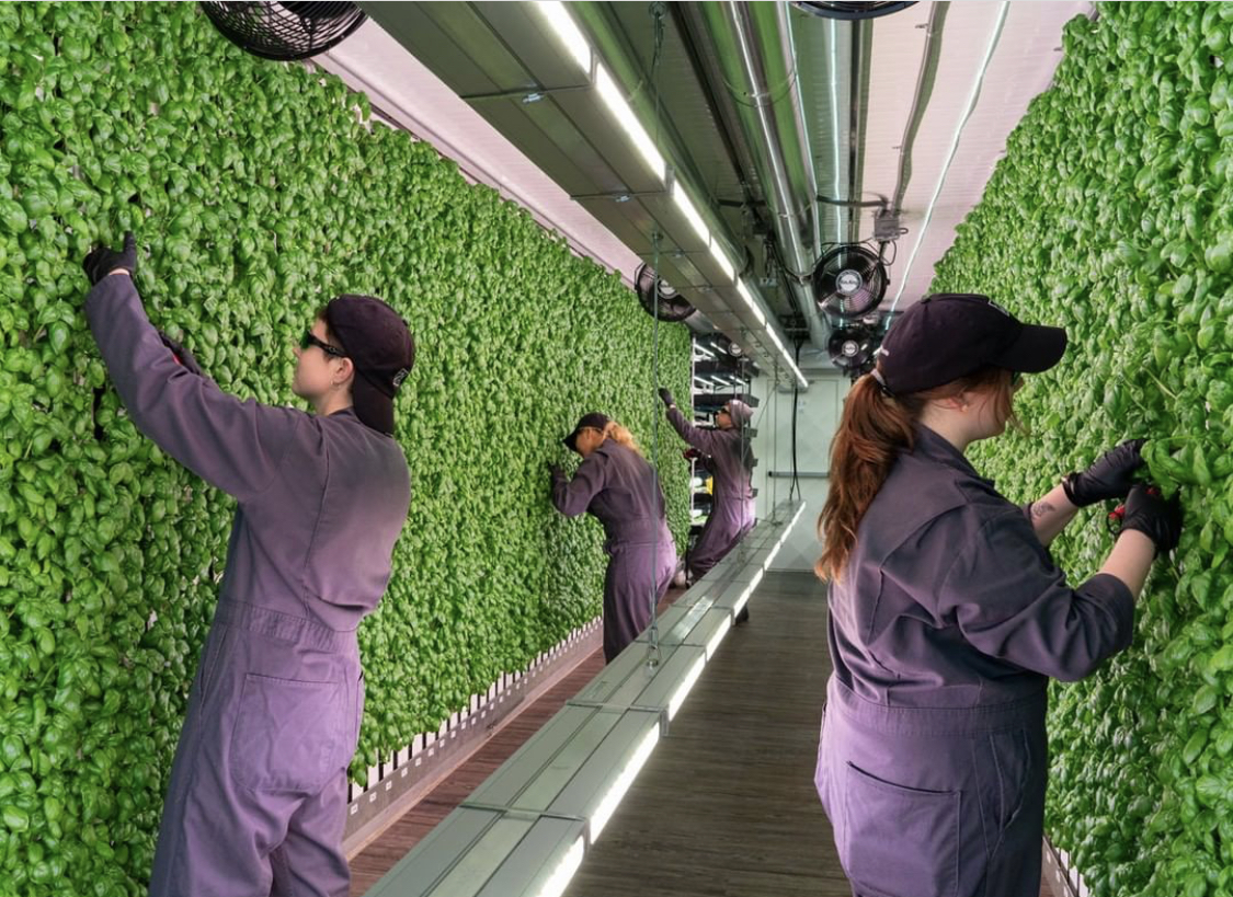 this is a photo of vertical farming at Square Roots, founded by Kimbal Musk