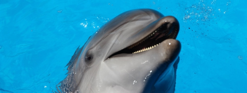 photo of a dolphin in Hawaii