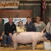 photo shows Paxton Peacock of NBC Showpigs, a winner of the Algernon Sydney Sullivan Award at Auburn University
