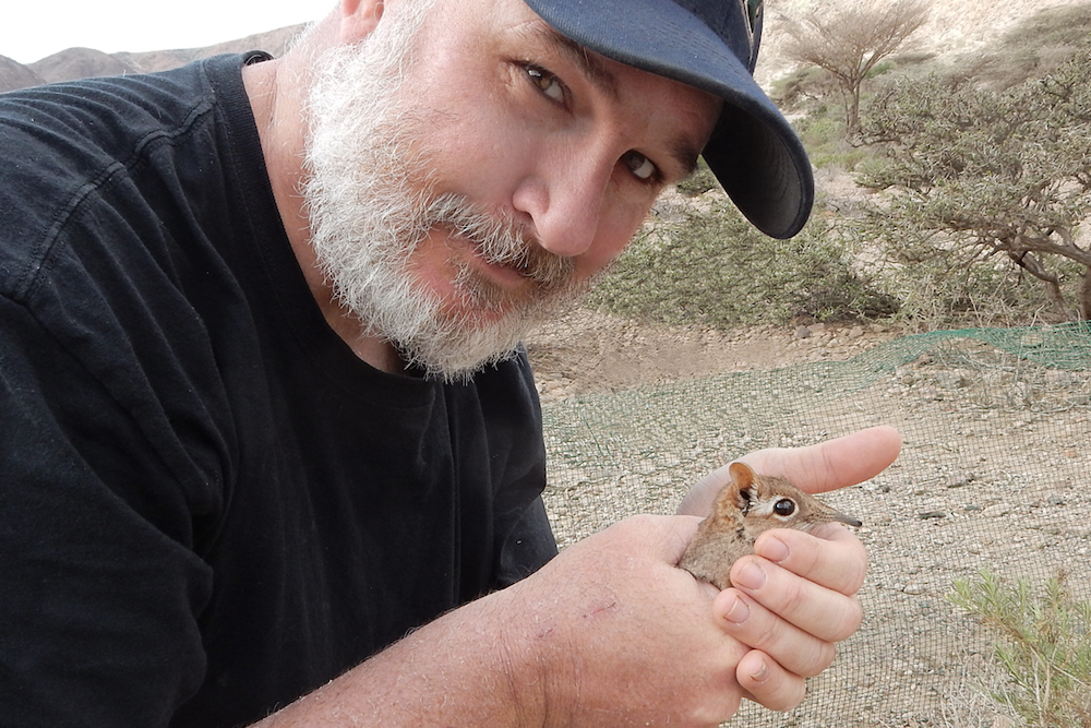 this photo shows Dr. Steven Heritage of Duke University with a small brown Somali sengi or Somali elephant-shrew
