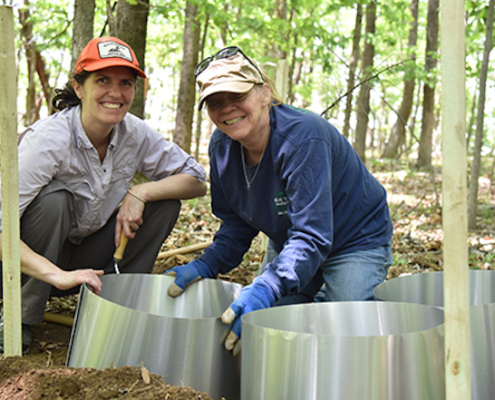 this photo shows Dr. Elizabeth Gleim setting up tick arenas for her Lyme disease research at Hollins University