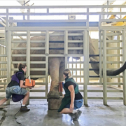this photo shows several vet techs working with a huge elephant at the Elephant Sanctuary in Hohenwald, Tennessee